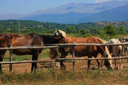 Photo Marko Kapitanovic - Split and Dalmatia County Tourist Board-2