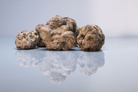 truffles-in-istria-1