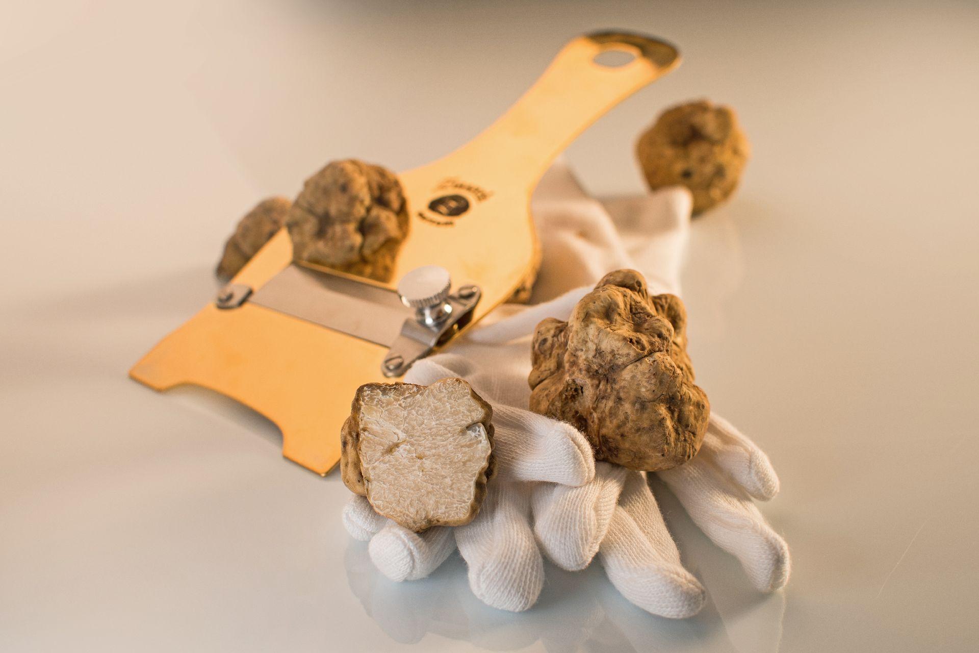 truffles-in-istria-2